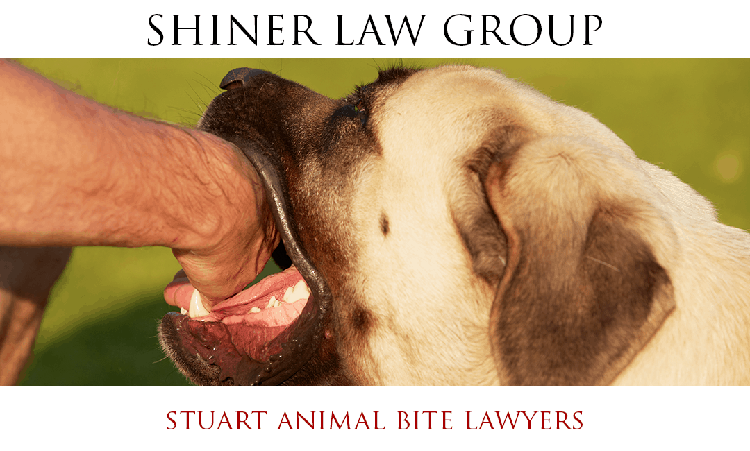 Stuart Animal Bite Lawyers
